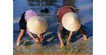Film-conférence : Vietnam