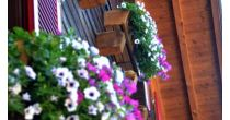 Le monde des fleurs à Feschel