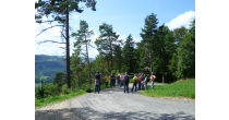 Waldgang mit Forst Thal