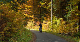 Cycle through the colourful landscape