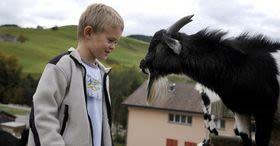 animals and farming