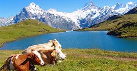 Découvrir Grindelwald