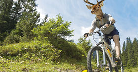 Mountain bike nel Goms