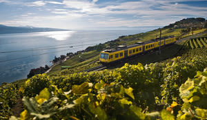 By Train across the Vineyards, Lavaux