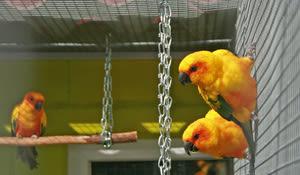 Vogelpark Ambigua