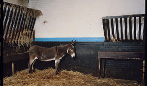 A donkey in blackpool wall