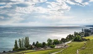 Sicht auf das Lavaux und Genfersee bei Vilette im Kanton Waadt.
