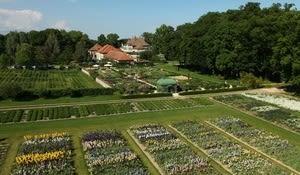 Jardins du Château de Vullierens (Iris)