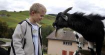proche des paysans et des animaux de ferme