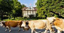 Sommer in Gstaad geniessen