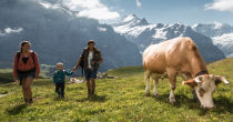 Descubrir Grindelwald
